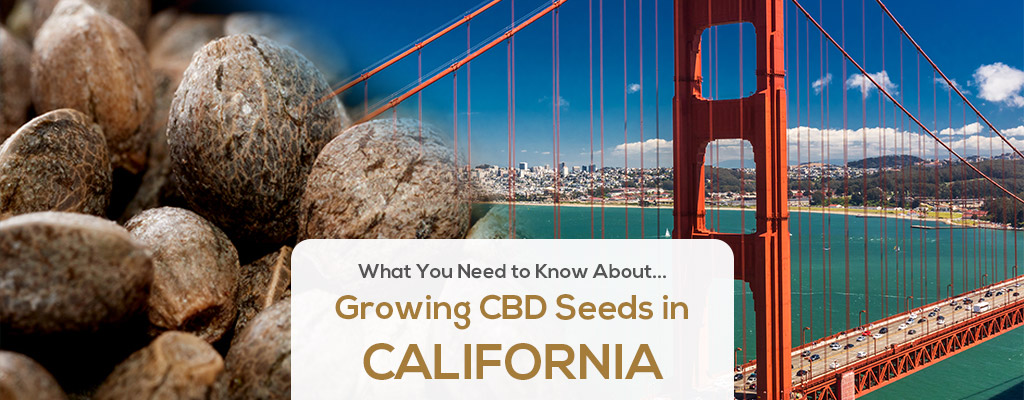 cbd-seed-co-where-we-grow-header-CALIFORNIA