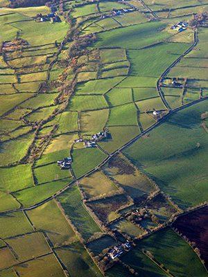 cbd-seed-co-where-we-grow-news-ireland