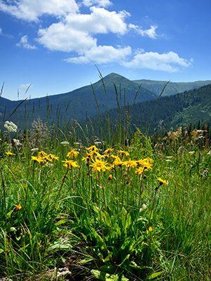 cbd-seed-co-where-we-grow-organizations-montana