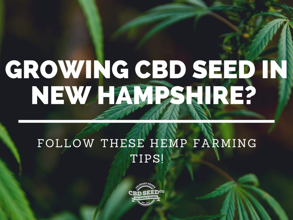 cbd seed new hampshire hemp farming tips