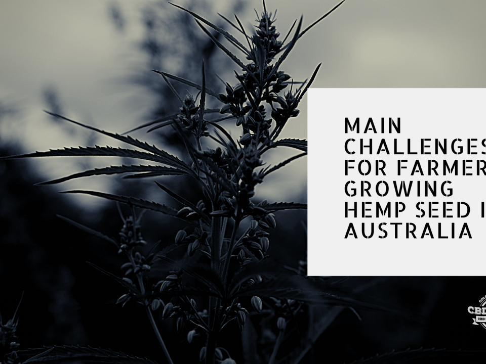challenges farmers growing hemp seed australia