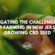 challenges growing cbd seed new jersey