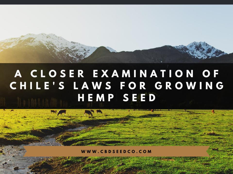 chile laws growing hemp seed