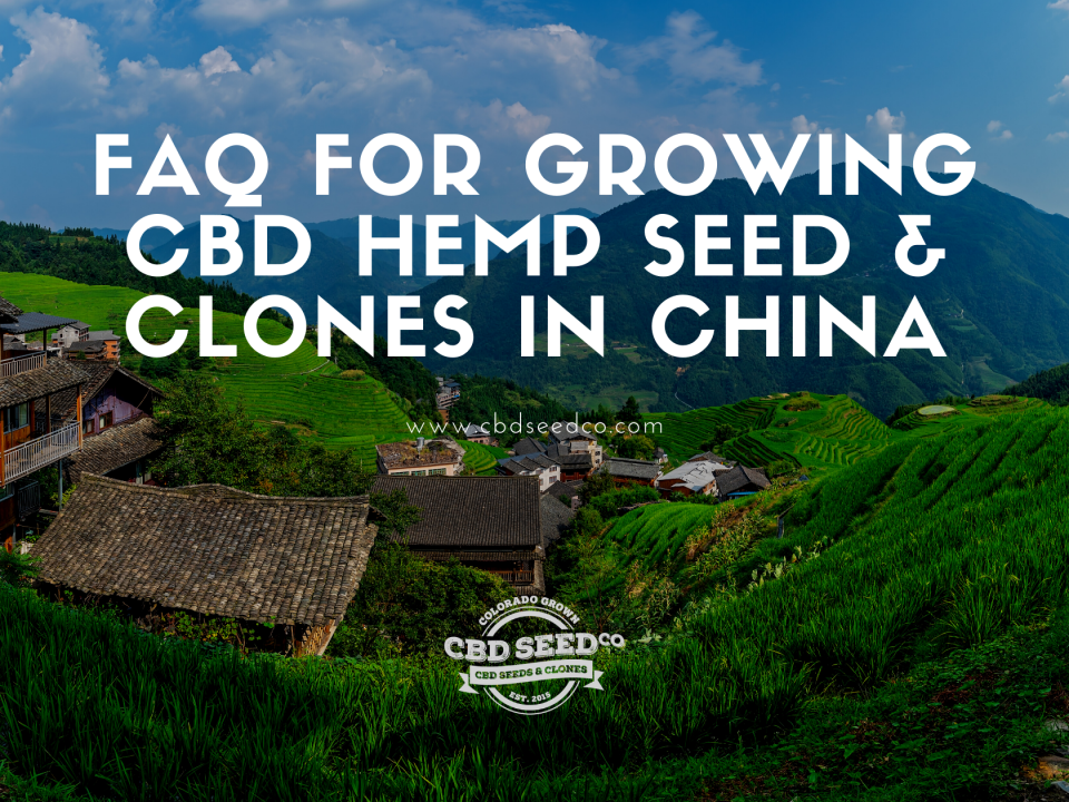 faq growing hemp seed clones china