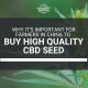 farmers china buy high quality cbd seed