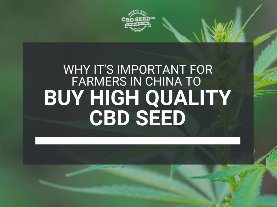 farmers china buy high quality cbd seed
