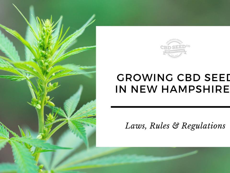 growing cbd hemp seed new hampshire