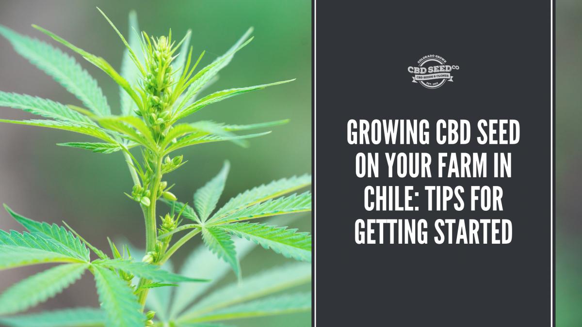 growing cbd seed farm chile tips