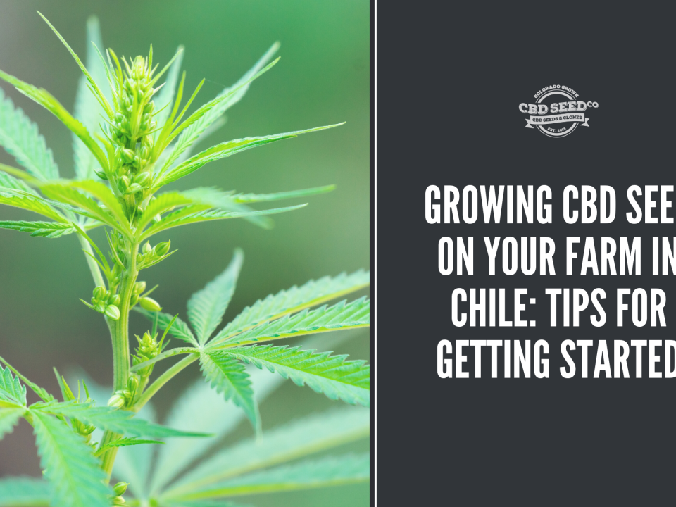 growing cbd seed farm chile tips