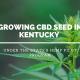 growing cbd seed kentucky hemp pilot program