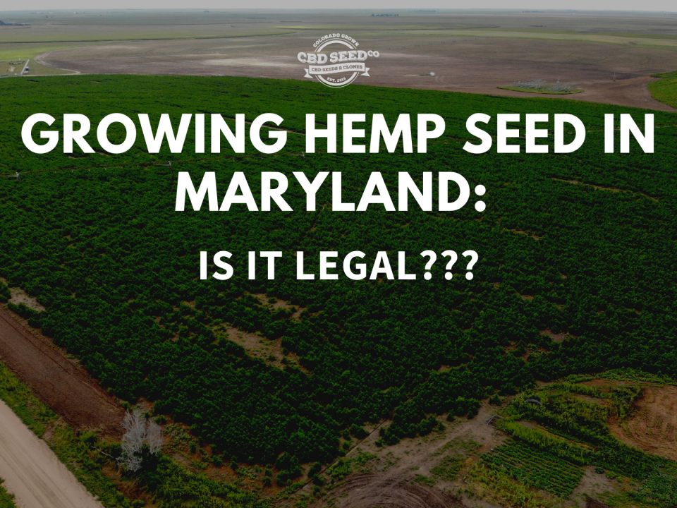 growing hemp seed maryland legal