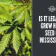 legal grow hemp seed mississippi