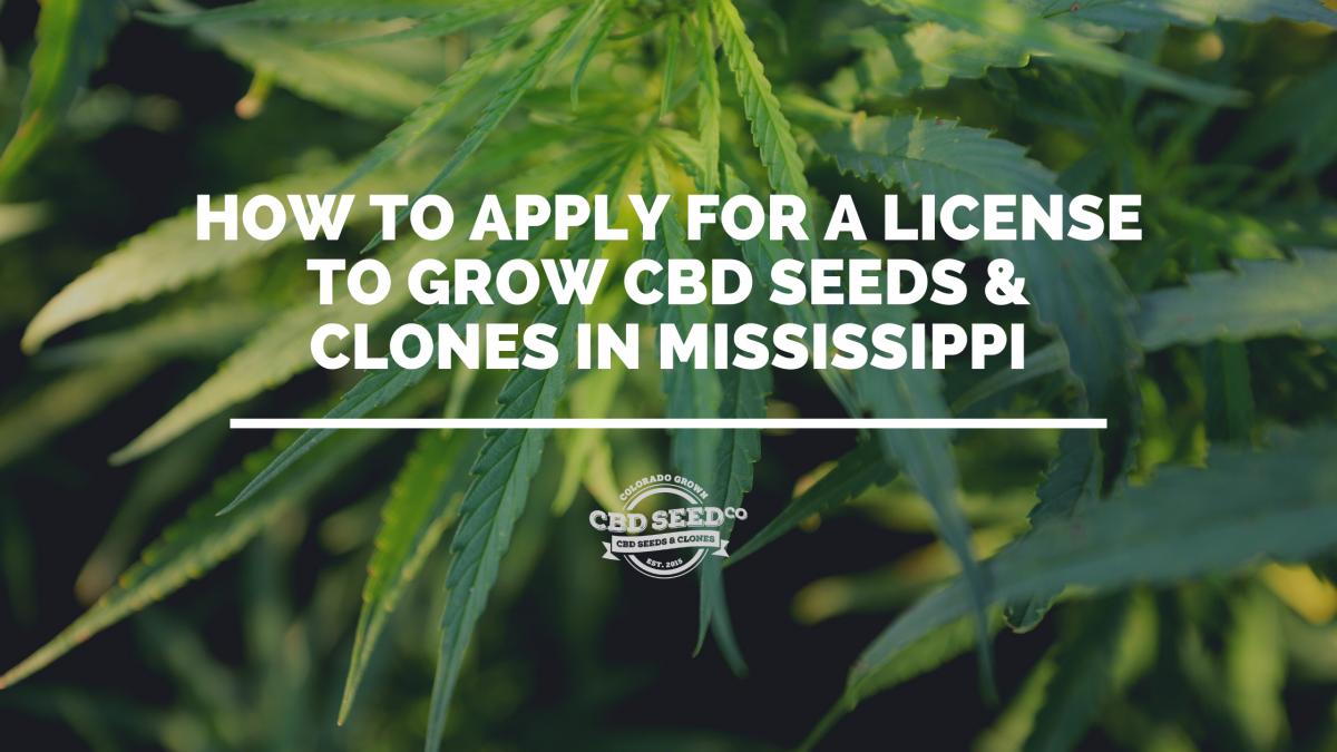 license cbd seed hemp mississippi