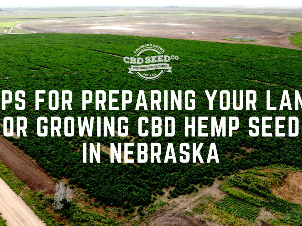 tips for growing cbd hemp seed in nebraska