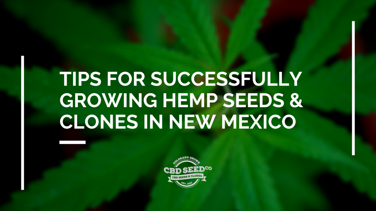 tips growing hemp seed clones new mexico