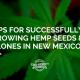 tips growing hemp seed clones new mexico