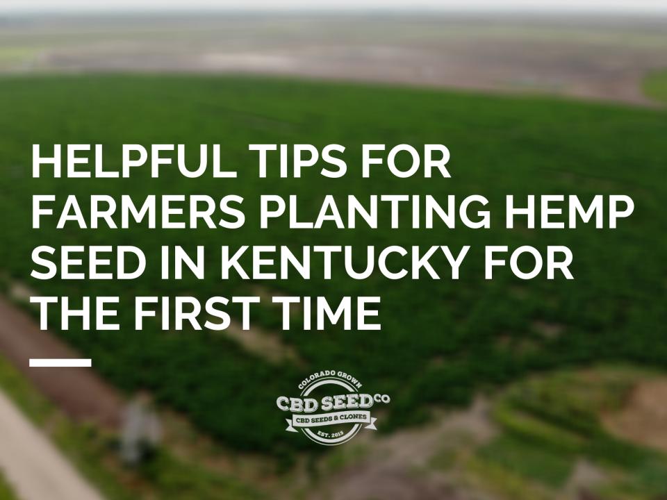 tips planting hemp seed kentucky