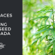 top places growing hemp seed canada