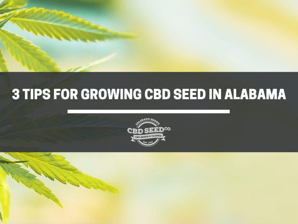 cbd seed alabama