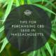 cbd seed massachusetts