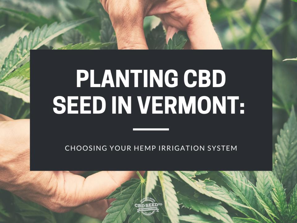 cbd seed vermont