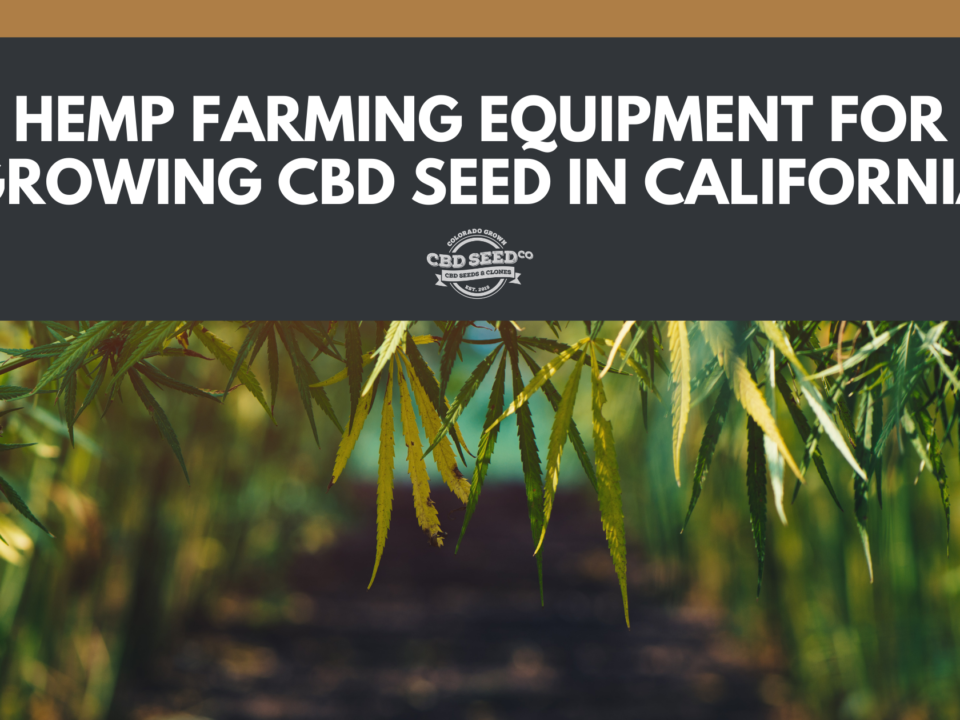 cbd seed california
