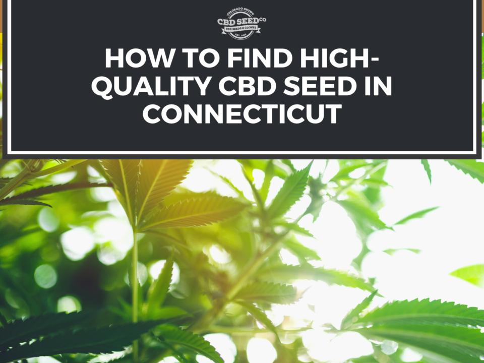 cbd seed connecticut