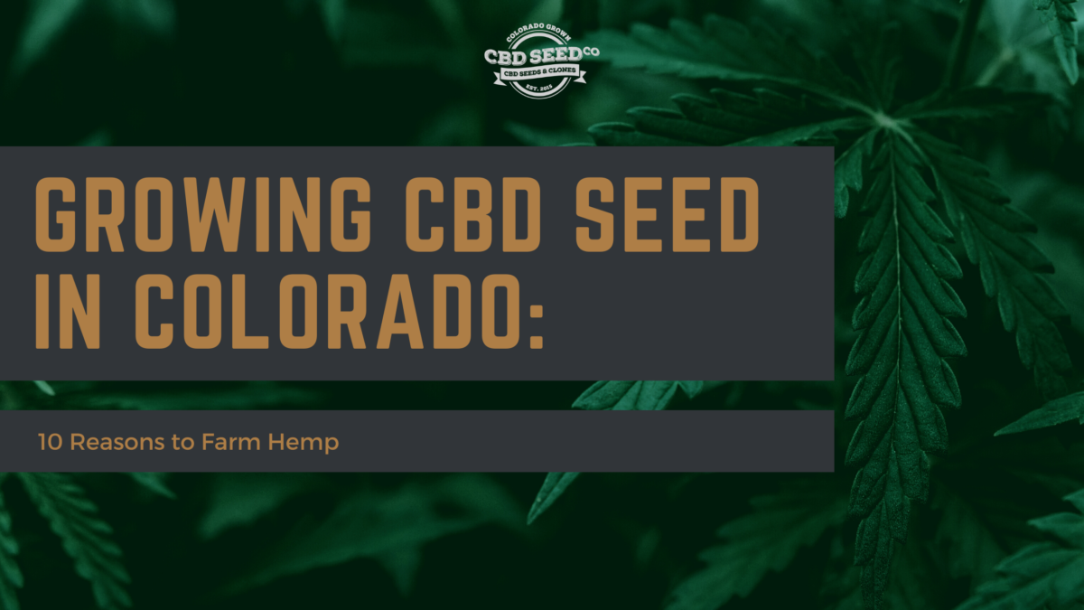 cbd seed colorado