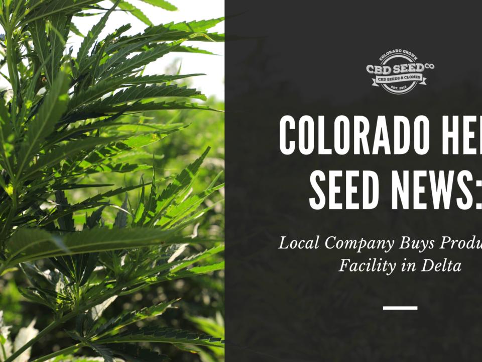 colorado hemp seed news company buys facility