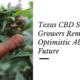 texas CBD seed growers optimistic