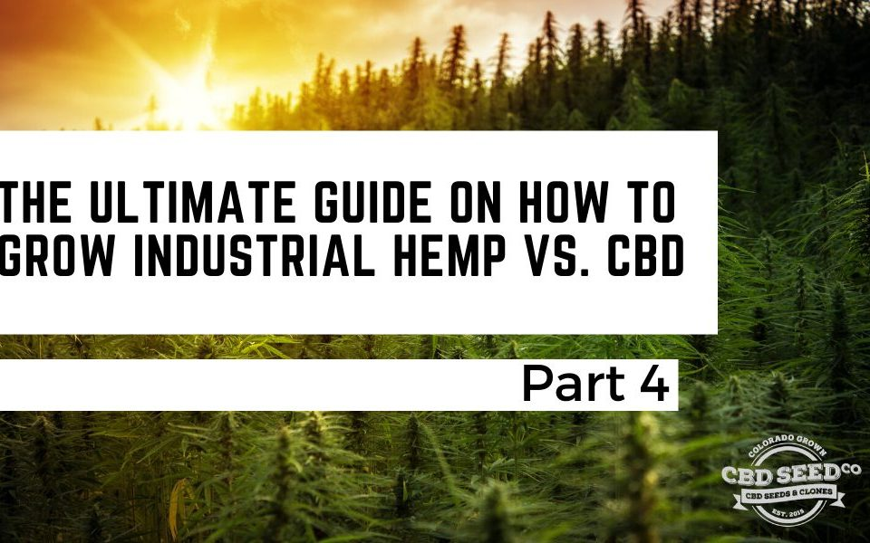 the ultimate guide on how to grow industrial hemp vs. cbd