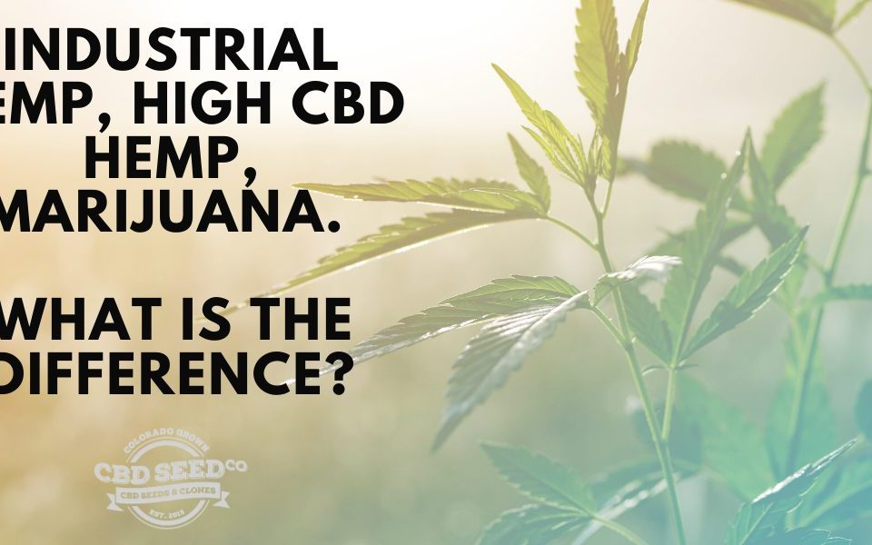industrial hemp, high cbd hemp, marijuana. What is the difference?