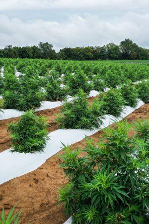 florida hemp growing regions of state