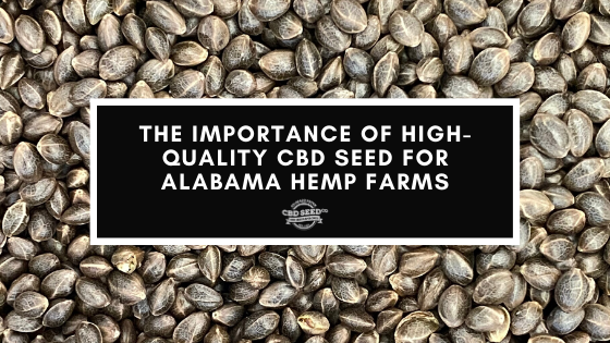 the importance of high quality cbd seed for alabama farmers
