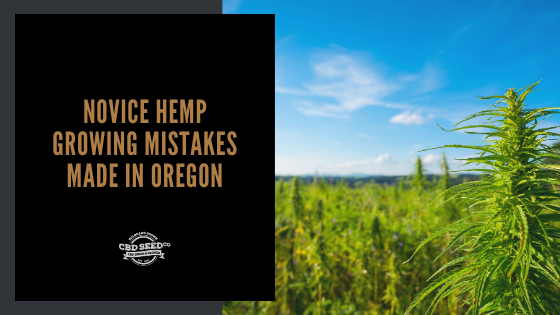 cbd seed co, hemp field, novice hemp growing mistakes made in oregon