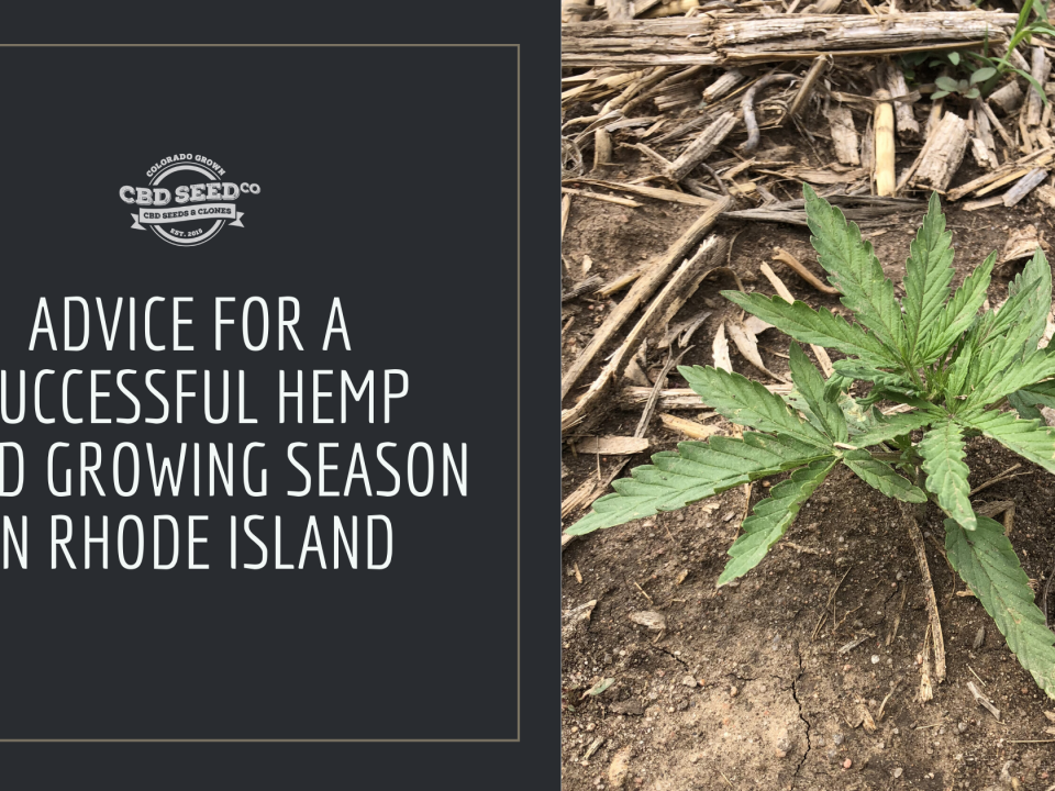 advice hemp seed growing rhode island