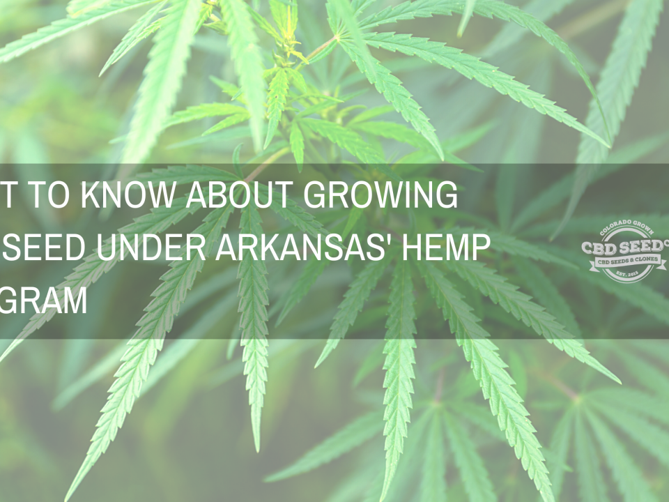 whats to know about growing cbd seed under arkansas hemp program