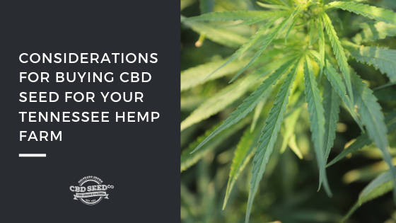 buying cbd seed tennessee