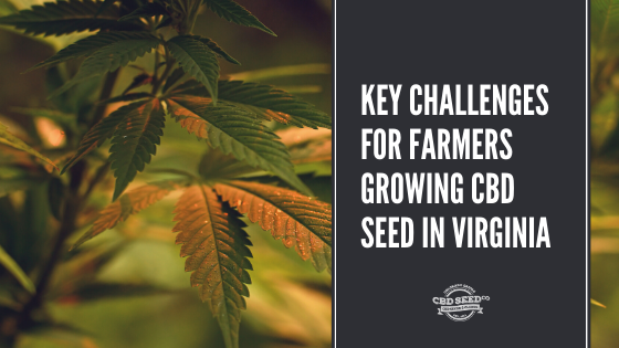 key challenges for farmers growing cbd seeds in virginia