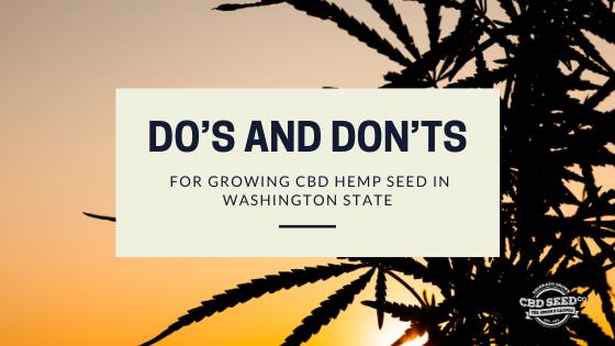 dos donts growing cbd hemp seed washington