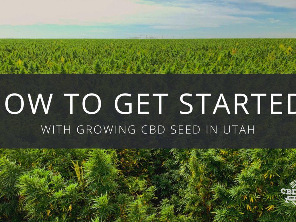 get started growing cbd seed utah