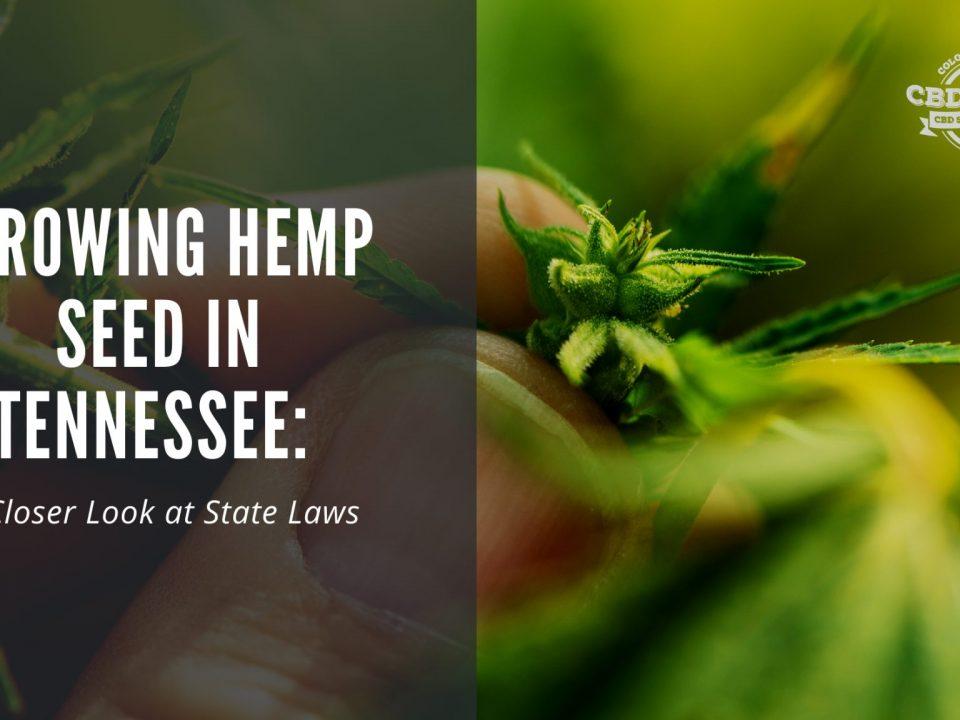 growing cbd seed tennessee hemp laws