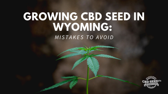 growing cbd seed wyoming, mistakes to avoid