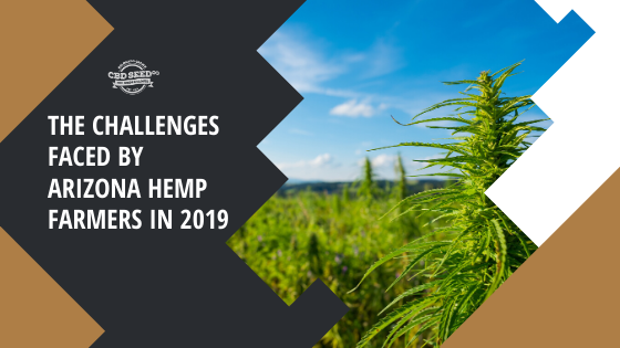 the challenges faces by arizona hemp farmers in 2019