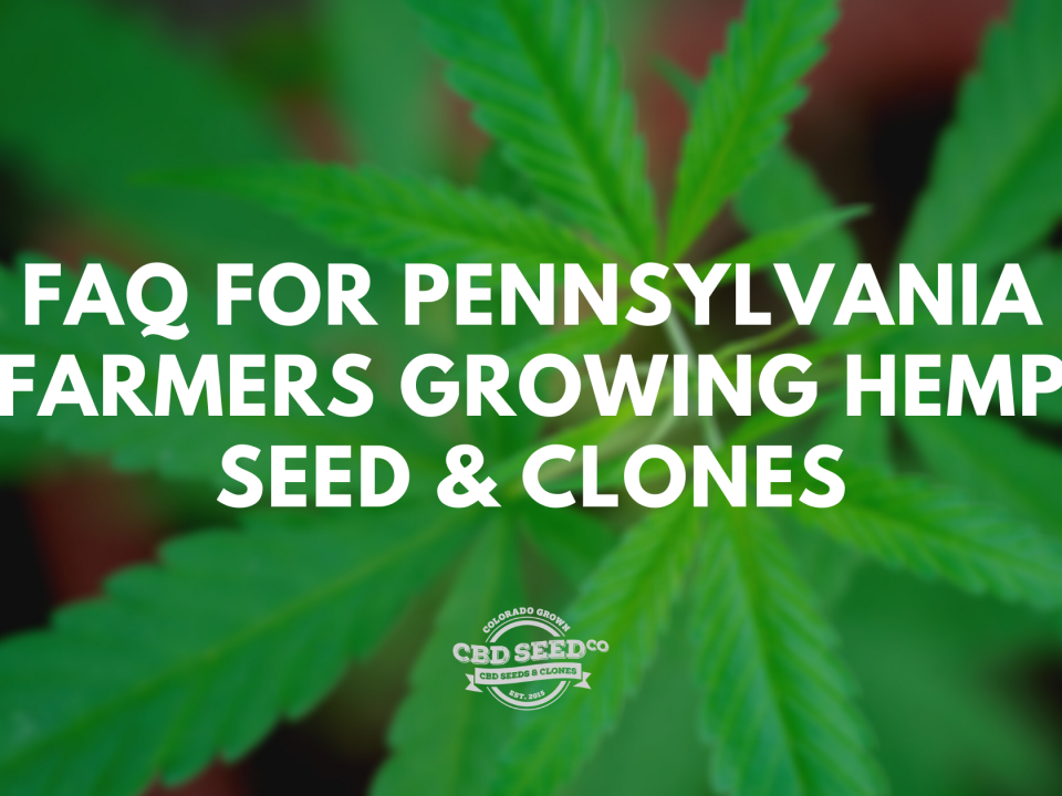 faq growing cbd seed clones pennsylvania