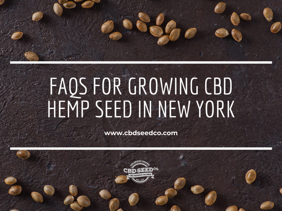 faq growing hemp seed new york