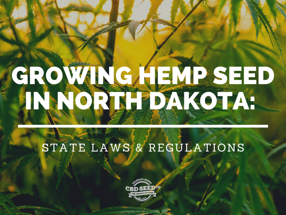growing cbd hemp seed north dakota laws