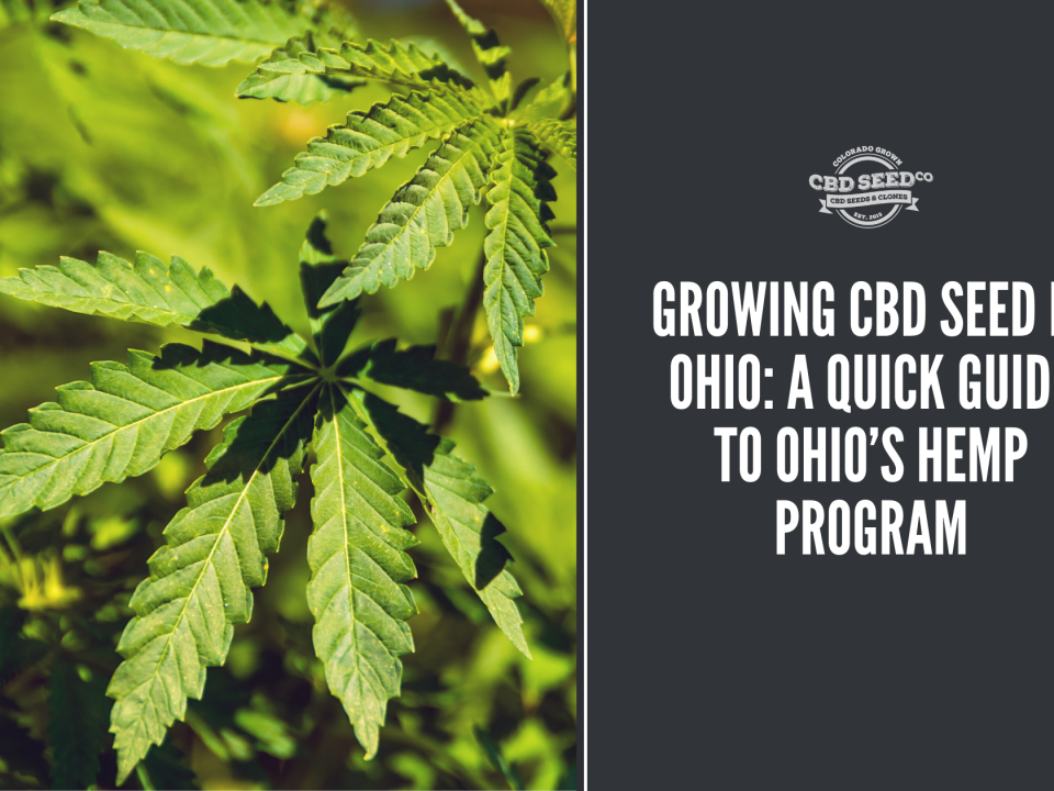 growing cbd seed ohio hemp program