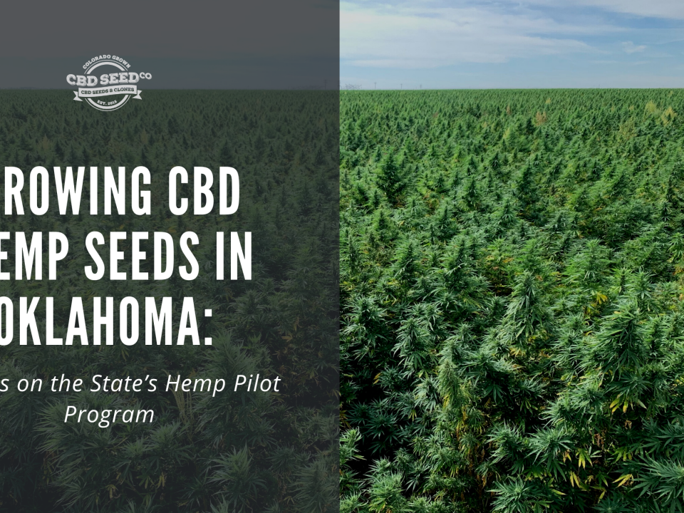 growing cbd seed okalhoma hemp laws