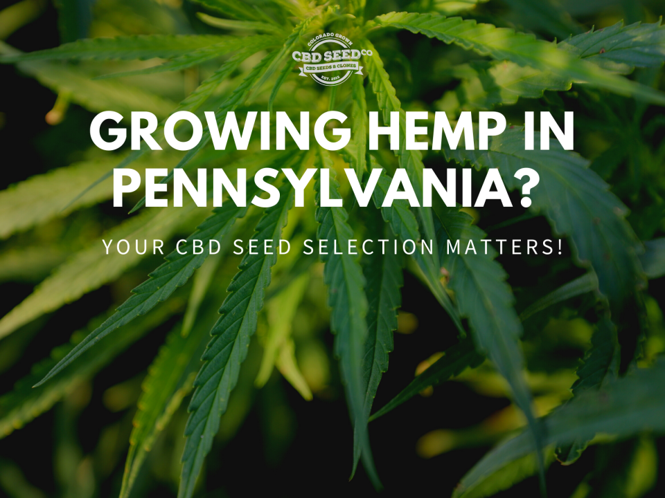 hemp pennsylvania cbd seed selection